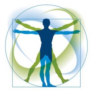 Mensch, Körper und Proportionen