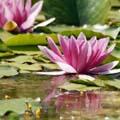 lotus-120x120