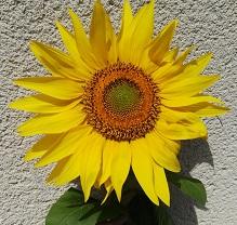 La Fleur du mois